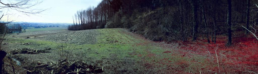 belgium-forest-000