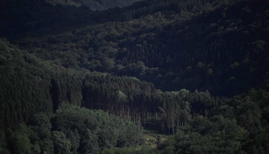 belgium-forest-003