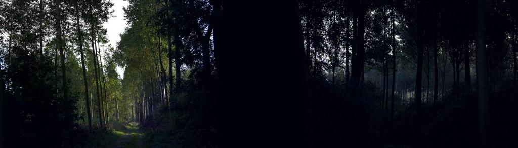 belgium-forest